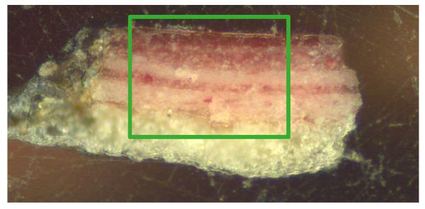 General image of the micro-sample by optical microscopy: cross-section 200x