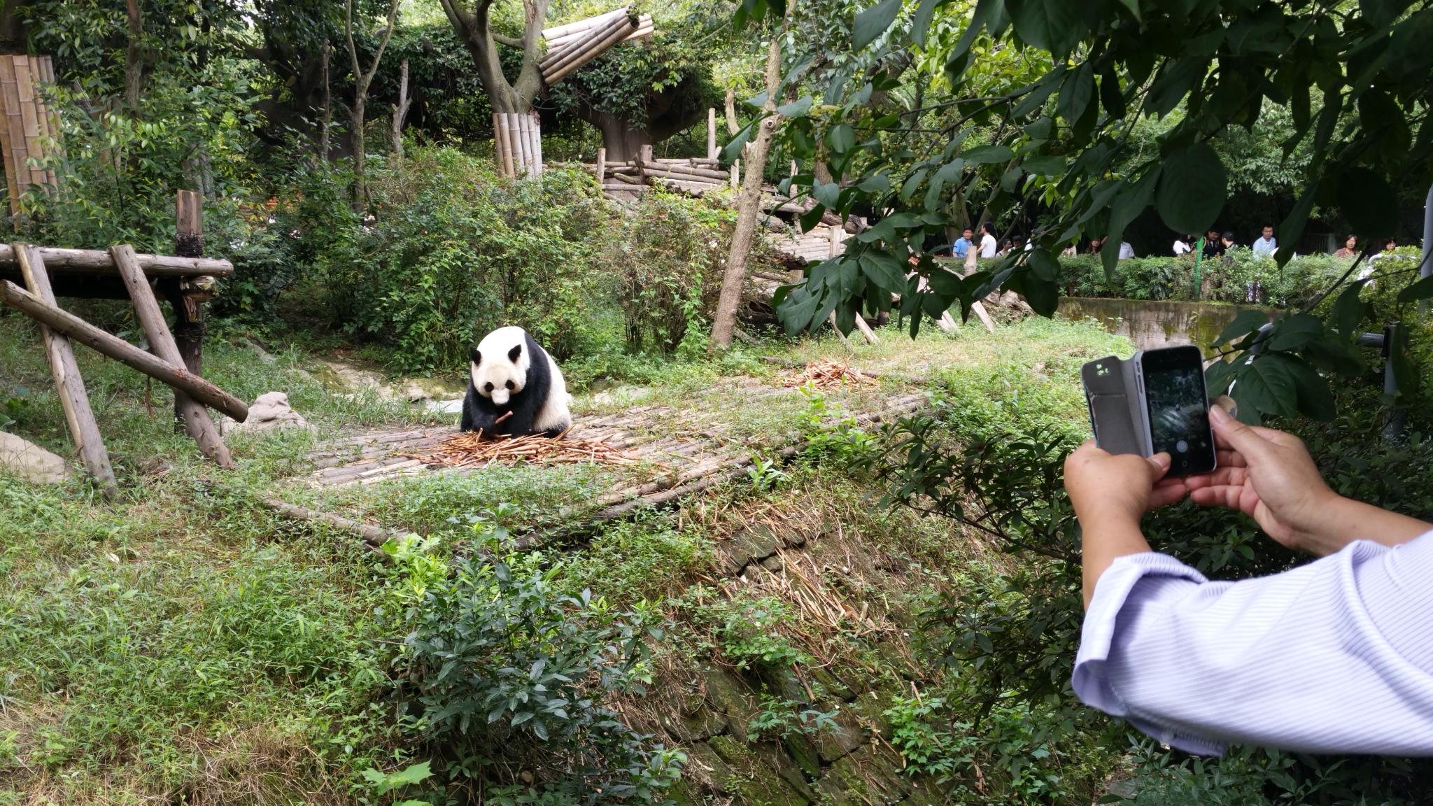 panda-park